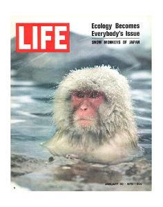LIFE Japan Snow Monkey-Ecology