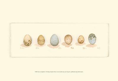 Life of a Songbird I-Nancy Shumaker Pallan-Art Print