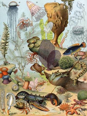 Life on the Sea Floor, Including Crustaceans and Molluscs