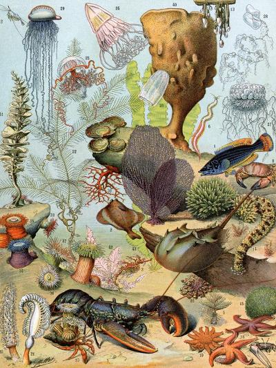 Life on the Sea Floor, Including Crustaceans and Molluscs--Giclee Print
