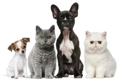Group of Dogs and Cats in Front of White Background by Life on White
