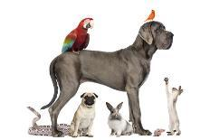 Group Of Pets - Dog, Cat, Bird, Reptile, Rabbit, Isolated On White-Life on White-Photographic Print