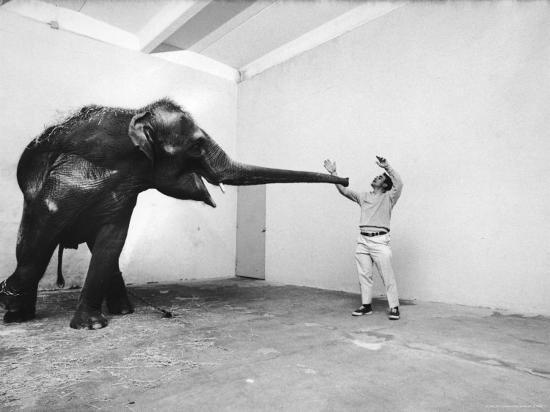Life Photographer Arthur Schatz with Elephant While Shooting Story on the Franklin Park Zoo-Arthur Schatz-Photographic Print