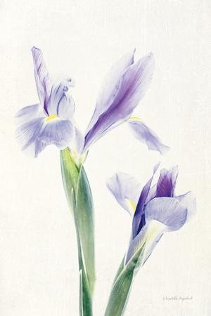 https://imgc.artprintimages.com/img/print/light-and-bright-floral-iii_u-l-q1awltn0.jpg?p=0