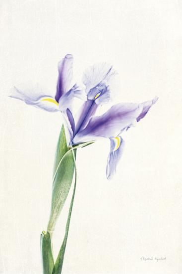 Light and Bright Floral IV-Elizabeth Urquhart-Photo