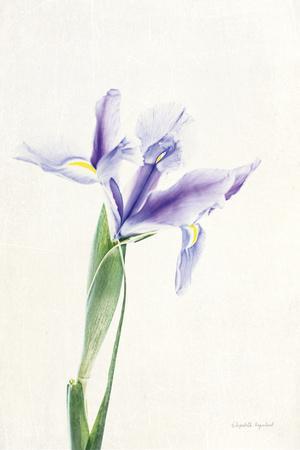 https://imgc.artprintimages.com/img/print/light-and-bright-floral-iv_u-l-q1awm2l0.jpg?p=0