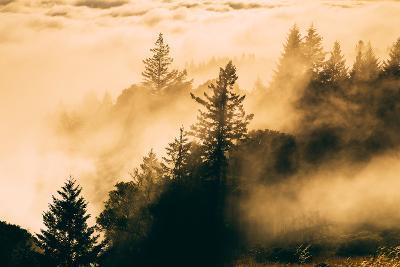 Light and Fog Play Mount Tamalpais, Marin County, San Francisco-Vincent James-Photographic Print