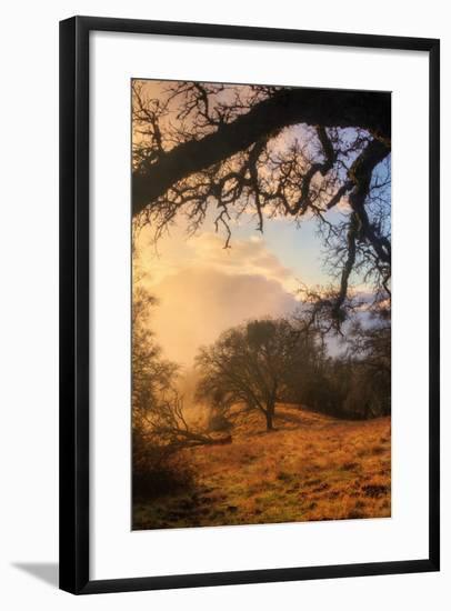Light and the Back Woods-Vincent James-Framed Photographic Print