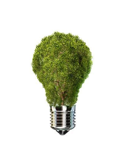 Light Bulb with Tree Inside Glass, Isolated on White Background--Art Print