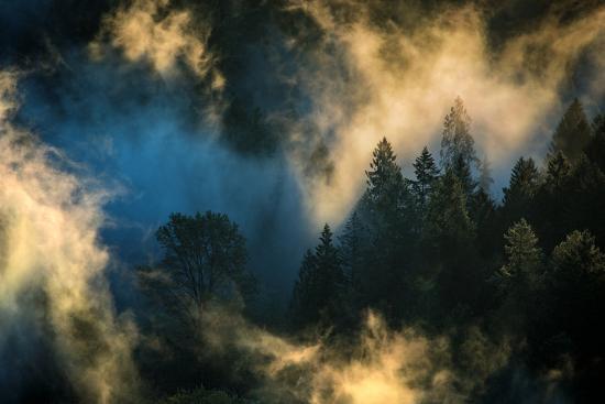 Light & Fog Warm Abstract Design Pacific Northwest Oregon-Vincent James-Photographic Print