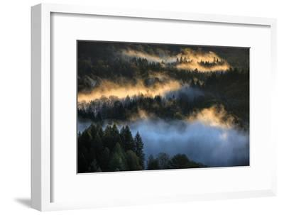 Light & Fog Wonderland Abstract Mount Hood Wilderness Sandy Oregon Pacific Northwest-Vincent James-Framed Premium Photographic Print