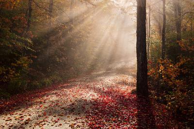 Light in the Forest-Michael Blanchette-Photographic Print