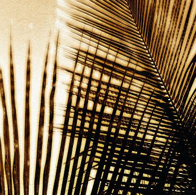 Light on Palms I-Malcolm Sanders-Giclee Print