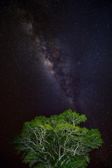 Light painted tree in the foreground with the Milky Way Galaxy in the Pantanal, Brazil-James White-Photographic Print