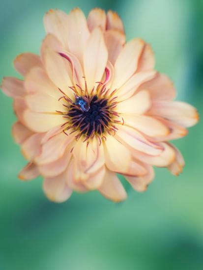 Light Yellow Flower-Mirja Paljakka-Art Print
