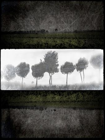 Black Tree 2 by LightBoxJournal