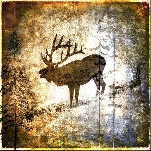 High Country Elk by LightBoxJournal