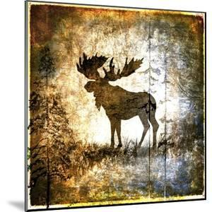 High Country Moose by LightBoxJournal