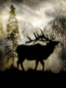 Mystic Elk by LightBoxJournal