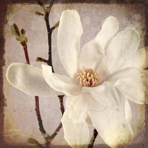 Paper Magnolia Closeup by LightBoxJournal