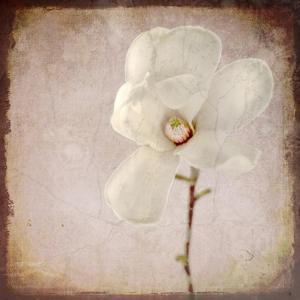 Paper Magnolia by LightBoxJournal