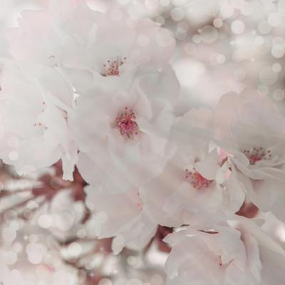 Pinky Blossom 1 by LightBoxJournal