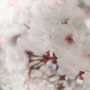 Pinky Blossom 2 by LightBoxJournal