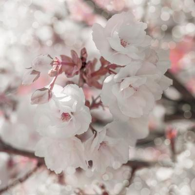 Pinky Blossom 4