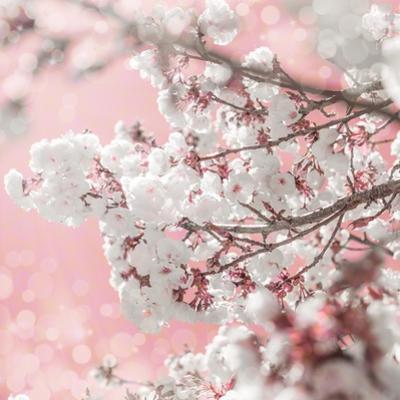 Pinky Blossom 5 by LightBoxJournal