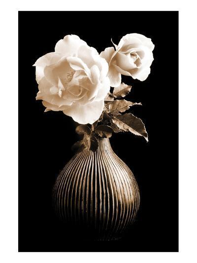Lighted White Roses-Christine Zalewski-Art Print