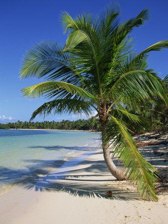 Palm Tree on Tropical Bavaro Beach, Dominican Republic, West Indies, Caribbean, Central America