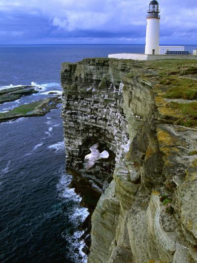Lighthouse and Cliffs at Noup Head Rspb Reserve, Westray, Orkney Islands, Scotland-Gareth McCormack-Photographic Print