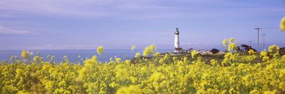 Lighthouse on the Coast, Pigeon Point Lighthouse, San Mateo County, California, USA--Photographic Print