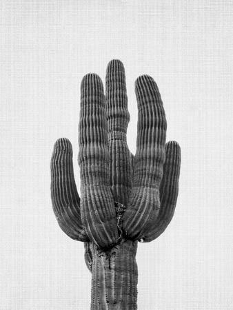 Cactus On Grey