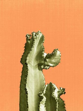 Cactus On Orange