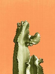 Cactus On Orange by LILA X LOLA