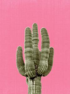Cactus On Pink by LILA X LOLA