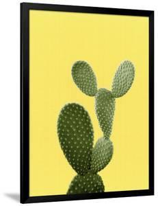 Cactus On Yellow by LILA X LOLA