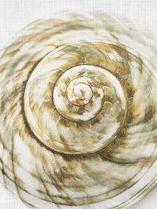 Sea Shell by LILA X LOLA