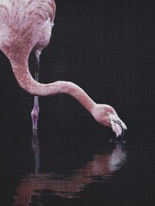 Tropical Flamingo by LILA X LOLA