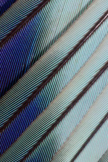 Lilac Breasted Roller Feathers Pattern-Darrell Gulin-Photographic Print