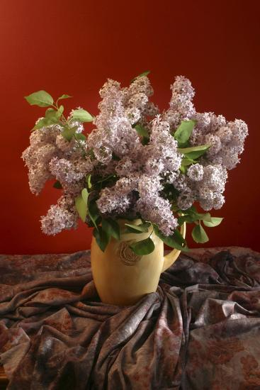 Lilac Flowers in Vase-Anna Miller-Photographic Print