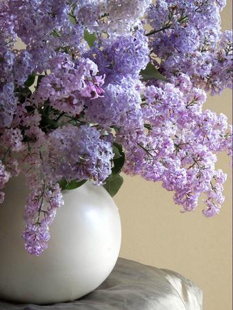 https://imgc.artprintimages.com/img/print/lilac-flowers-in-vase_u-l-pyq2u70.jpg?p=0