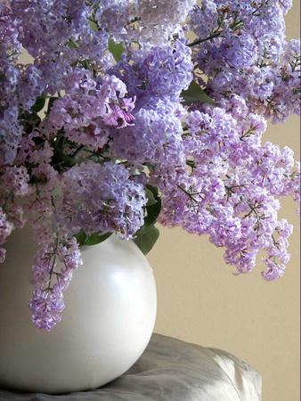 https://imgc.artprintimages.com/img/print/lilac-flowers-in-vase_u-l-pyq2up0.jpg?p=0