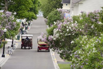 Lilac Lined Street with Horse Carriage, Mackinac Island, Michigan, USA-Cindy Miller Hopkins-Photographic Print