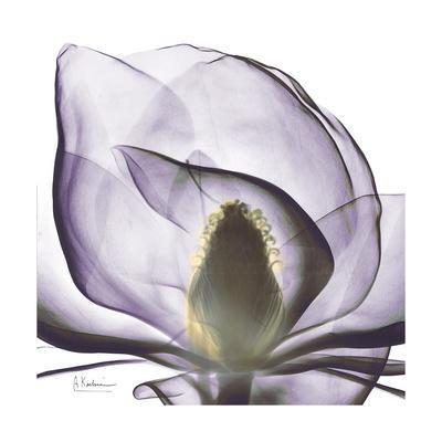 https://imgc.artprintimages.com/img/print/lilac-magnolia_u-l-pyjqla0.jpg?p=0