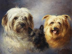 A Tibetan, a Cairn and a Silky Terrier by Lilian Cheviot