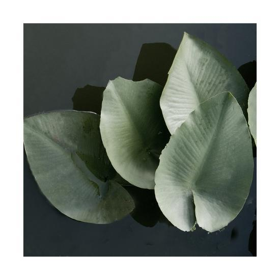 Lilies in a Grouping-Harold Silverman-Giclee Print