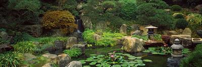 Lilies In A Pond At Japanese Garden, University Of California, Los Angeles,  California, USA Photographic Print By | Art.com