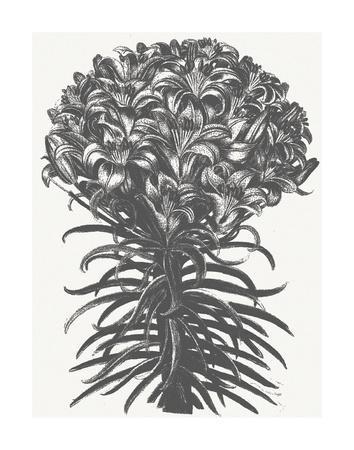 https://imgc.artprintimages.com/img/print/lilies-ivory-ink_u-l-f95gna0.jpg?p=0